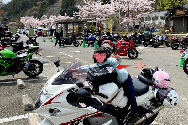 隼で道志、あかりと桜