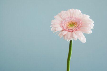 一輪の花は美しい